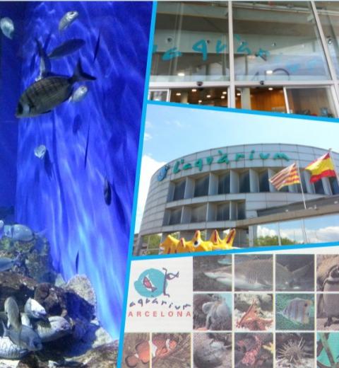 Immersion à l'aquarium de Barcelone